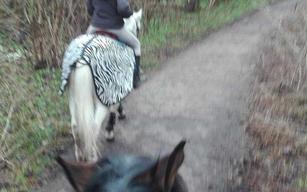 Partir avec son cheval en trotting
