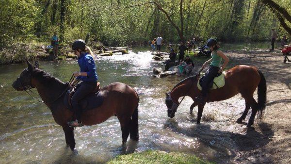 Baignade chevaux dans une rivière